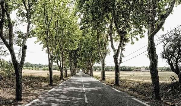 Acme Avenue