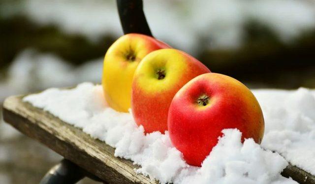 apple snow winter outdoor-space