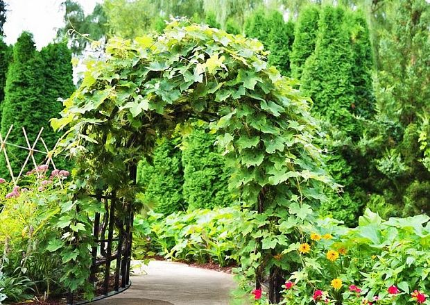 backyard diy idea: create an arbor