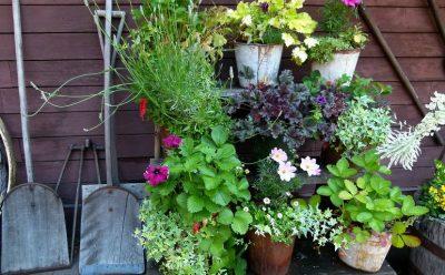 plant pots small backyard garden ideas