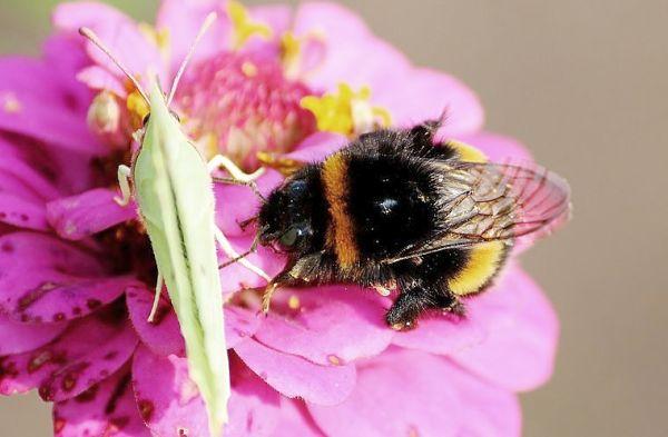pollinator-friendly-plants